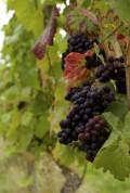 a'Beckett's Wine