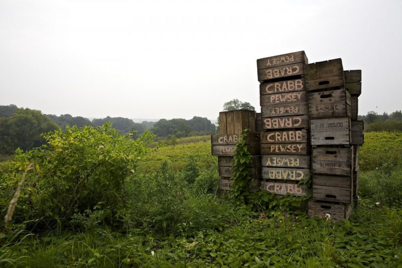 Apple boxes waiting for harvest